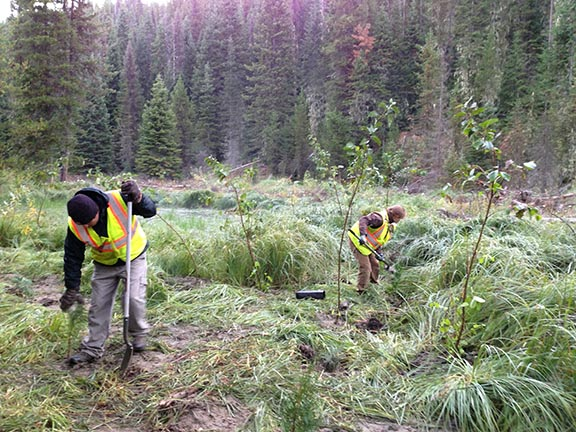 S&K Environmental employees hand plant and work the topography along Newsome Creek